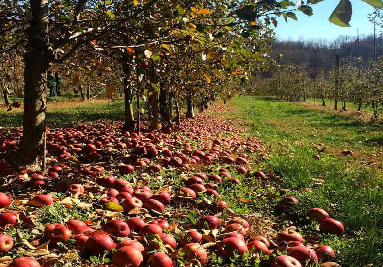 https://fitt.co/pittsburgh/apple-picking-pittsburgh/